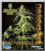 Philosopher Gokunk Female 5 Marijuana Seeds